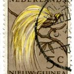 Nederlands Nieuw-Guinea, laatste thuisland van de Indo